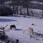 bartres_poneys_dans_la_neige